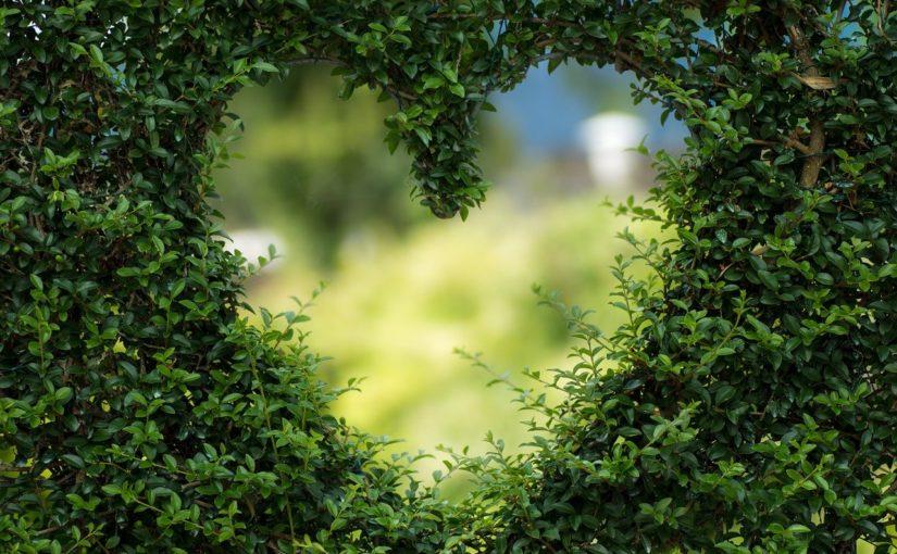 Piękny ,a także porządny ogród to zasługa wielu godzin spędzonych  w jego zaciszu w trakcie pielegnacji.